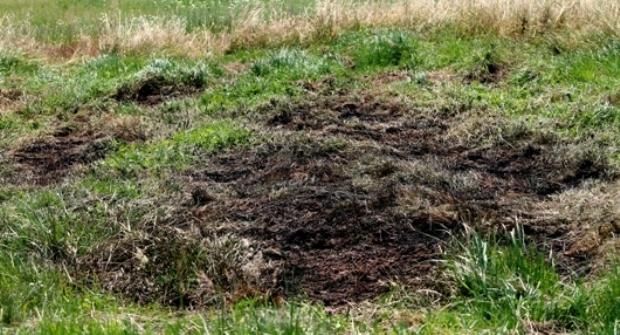 Bild: Wehrführer entdeckt Flächenbrand in Habach